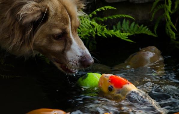 Wallpaper dog muzzle water dog mood fish face for Water dog fish