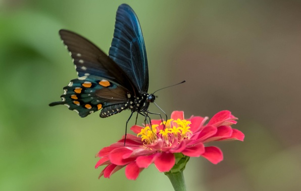 Picture flower, butterfly, paint, wings, petals, moth