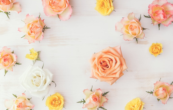 Picture wood, flowers, roses