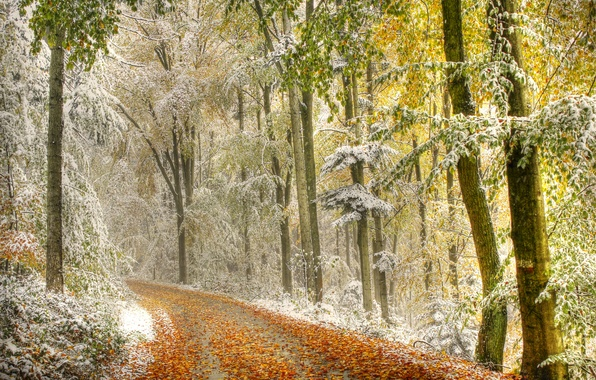 Picture road, autumn, forest, leaves, snow, trees, haze