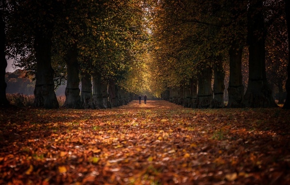 Picture autumn, Park, people