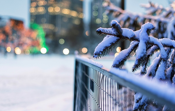 Picture winter, snow, nature, lights, the fence, spruce, branch, fence, tree, bokeh