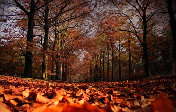 Picture autumn, leaves, trees, falling leaves, Autumn