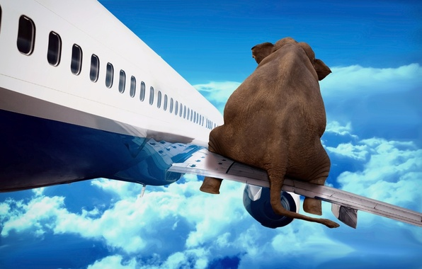 Picture the sky, flight, the plane, elephant, wing, art