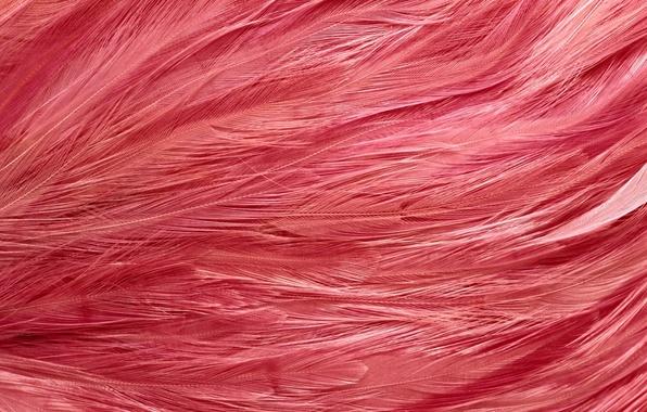 Picture feathers, texture, texture, background desktop, pink flamingos