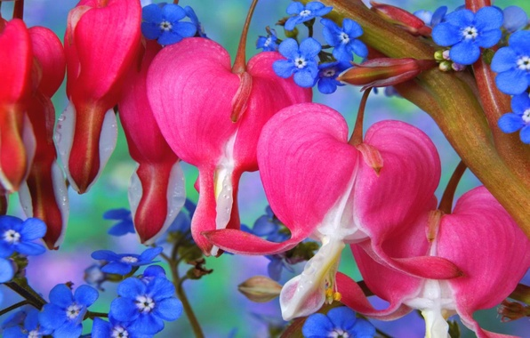 Picture leaves, branches, bouquet, petals, Bud, forget-me-nots, the bleeding heart