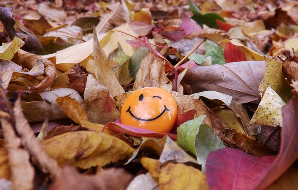 Picture SMILEY, LEAVES, COLOR, MACRO, SMILE, AUTUMN, FOLIAGE