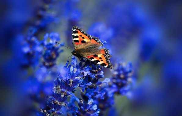 Picture macro, flowers, butterfly, wings, moth, inflorescence, urticaria