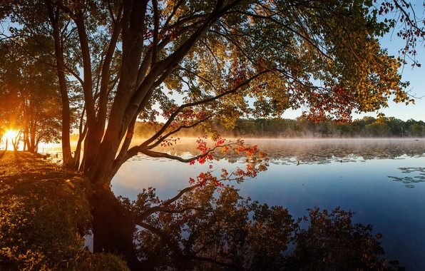 Picture autumn, forest, trees, lake, morning, haze