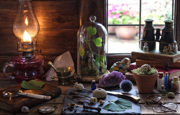 Picture crystal, science, books, lamp, egg, plants, window, glasses, binoculars, shell, still life, magnifier, mortar, amethyst, …