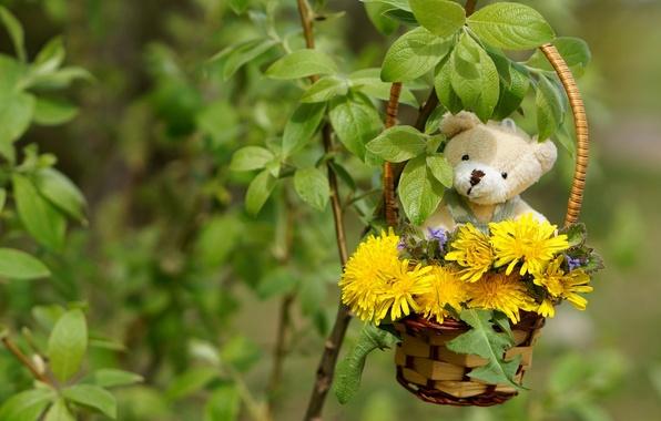 Picture leaves, Bush, bear, dandelions, basket