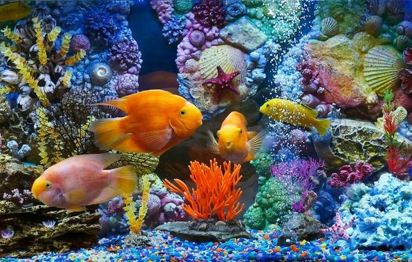 Picture fish, fish, aquarium, corals, shell