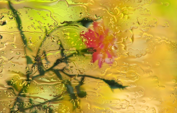 Picture glass, drops, flowers, rain, rose, bokeh