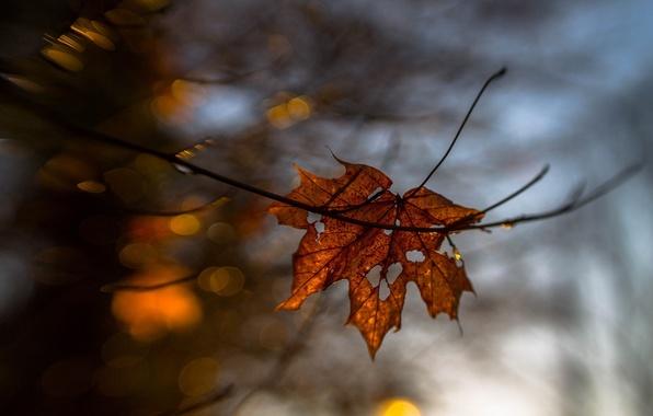 Picture autumn, macro, sheet, yellow, blur, dry