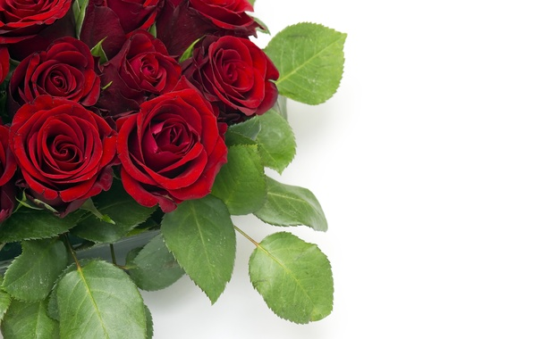 Picture leaves, flowers, bouquet, buds, red roses