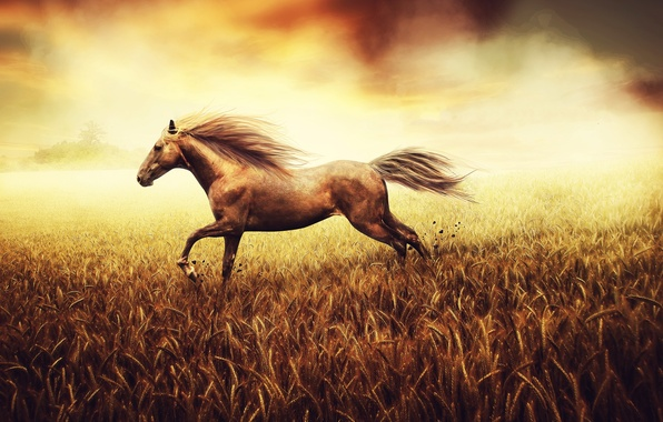 Picture wheat, field, stones, background, horse, earth, paint, figure, tail, pastel, canvas, tone, hooves, the freedom …