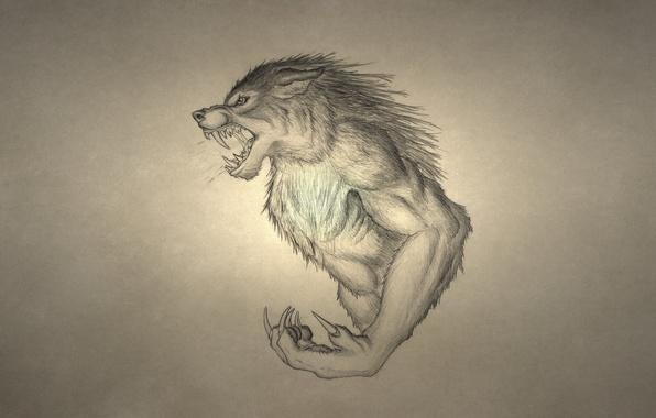 Picture wolf, werewolf, growls, wolf, werewolf