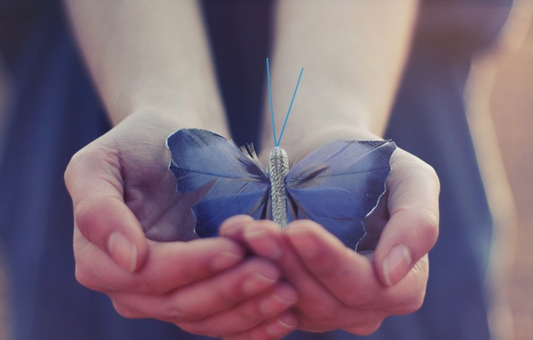 Picture butterfly, wings, hands