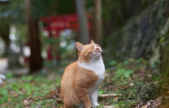 Picture ideal, fun, red cat