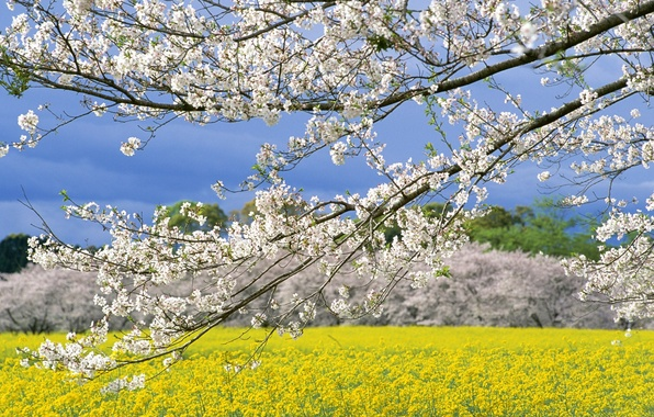 Picture Field, Spring, Japan