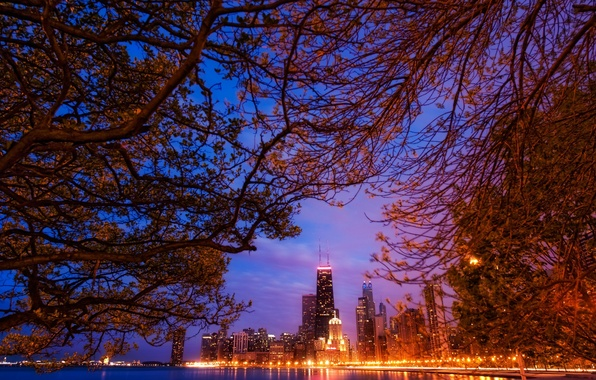 Picture landscape, night, branches, lights, skyscrapers, America, Chicago, Chicago, USA