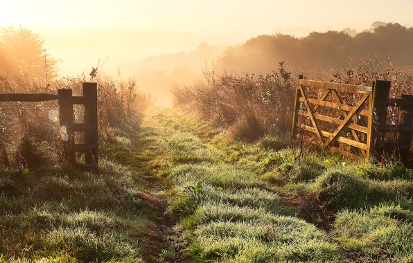 Picture field, landscape, nature, fog, the fence, morning