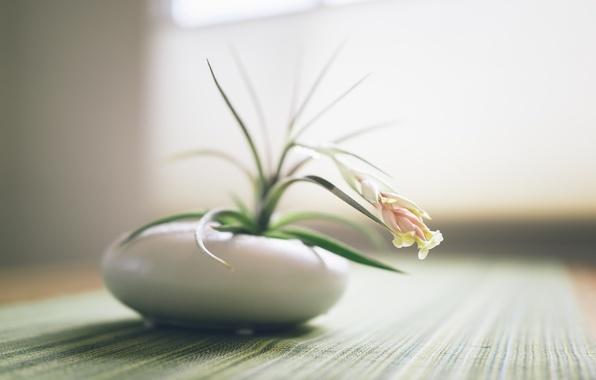 Picture white, flower, table, pot, pot, tablecloth
