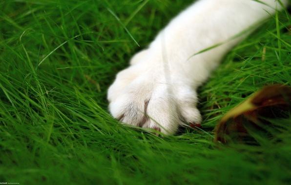 Picture greens, cat, microsemi, paw