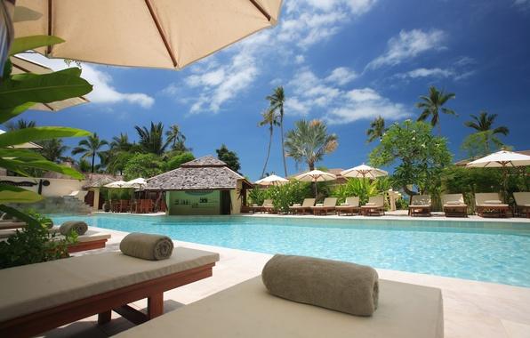 Picture Islands, trees, palm trees, bar, pool, the hotel, pool, bar, sunbeds, sun loungers, resort, Samui, …