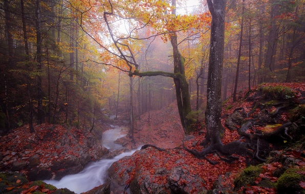 Picture autumn, forest, fog, river