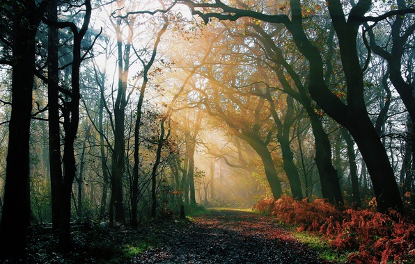 Picture road, autumn, forest, rays, light, nature, morning, after the rain