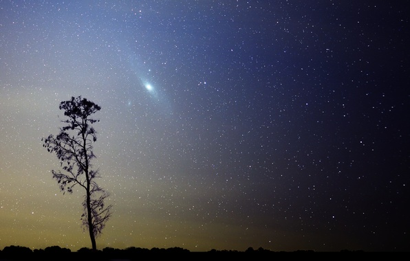 Picture stars, tree, galaxy, Andromeda, M31