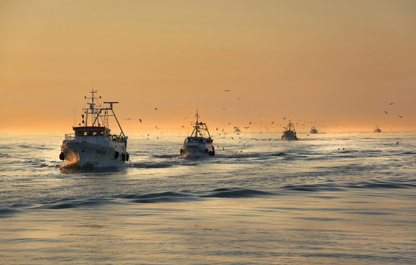 Picture sea, birds, seagulls, morning, boats, fishing