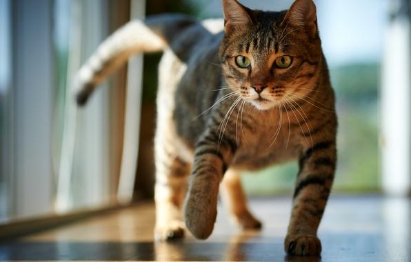 Picture cat, cat, the sun, room, floor