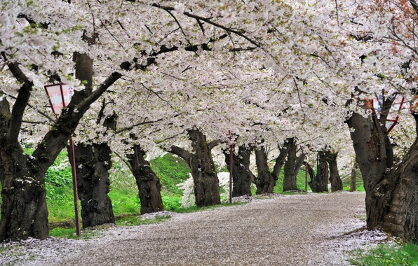 Picture spring, Japan, Sakura, Japan, Cherry Blossoms, sakura, spring, Park Hirosaki, cherry blossoms, Hirosaki Park