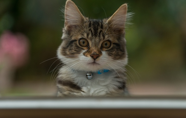 Picture eyes, look, background, cute, kitty
