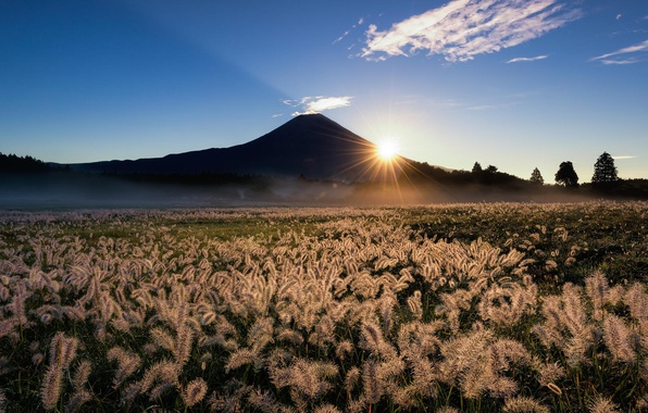 Picture field, the sky, grass, the sun, rays, nature, mountain, the volcano, Japan, Fuji, ears, Fuji