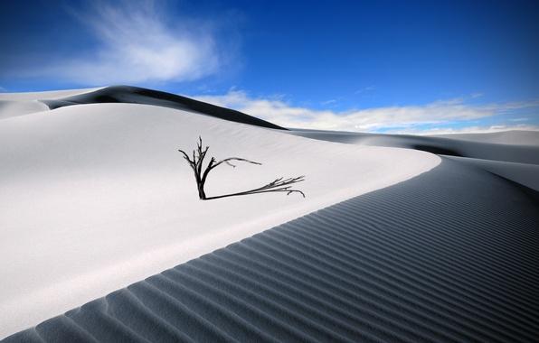 Picture sand, summer, the sky, desert, tree