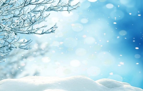 Picture winter, forest, snow, trees, snowflakes, nature, winter, snow
