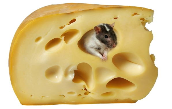 Picture mouse, cheese, white background, rat