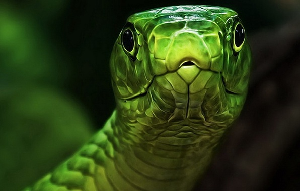 Picture eyes, snake, head, green