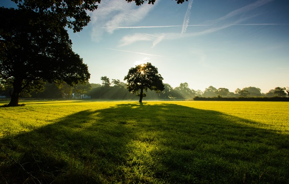 Picture field, the sky, grass, clouds, trees, Park, green, lawn