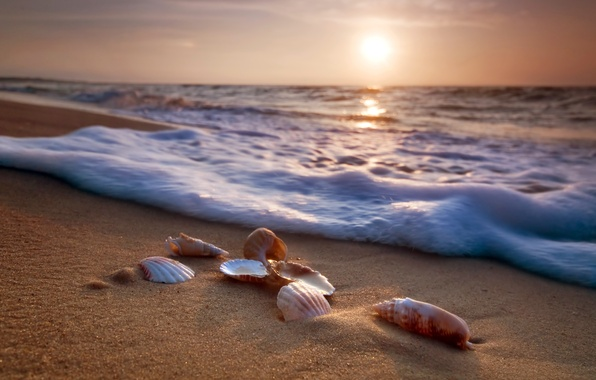 Picture sand, sea, beach, shore, shell, summer, beach, sea, blue, sand, shore, paradise, starfish, seashells