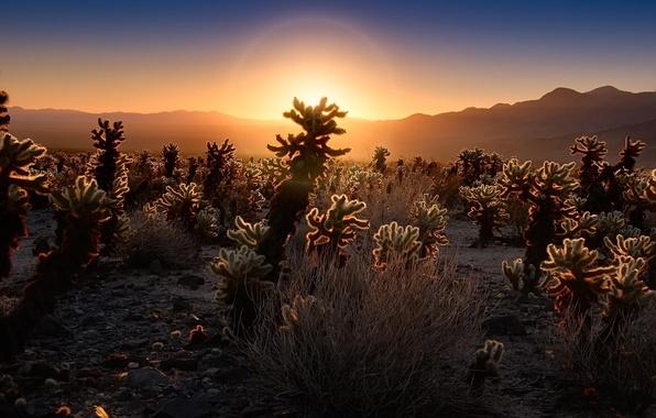 Picture sunset, nature, desert, cacti