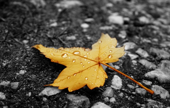 Picture autumn, asphalt, sheet, droplets, yellow, rain