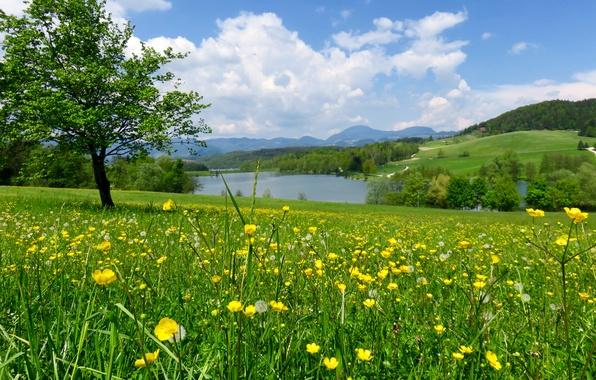 Picture greens, field, forest, summer, grass, flowers, river, tree, slope, meadow, dandelions, Slovenia, buttercups, Mozirje