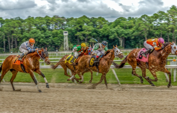 Picture horses, horse, hdr, riders, jump, Racecourse
