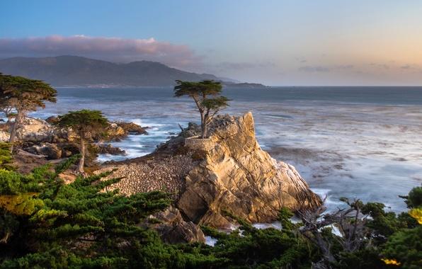 Picture sea, trees, stones, coast, horizon, CA, surf, USA, Pebble Beach