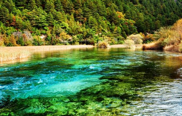 Picture forest, trees, river, China, Jiuzhaigou national park