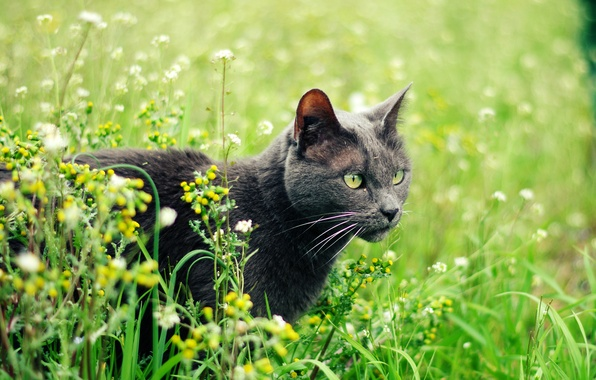Picture cat, summer, grass, cat, plants, grey, green-eyed